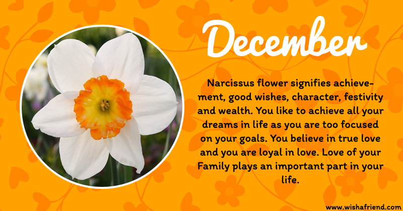 december birth flower  narcissus, Beautiful flower