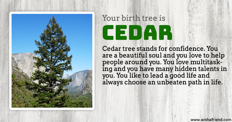 birth tree result cedar tree