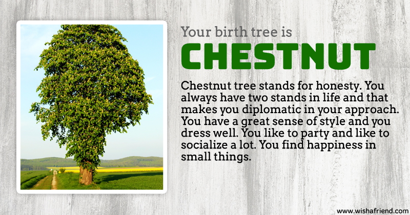 Your birth tree chestnut tree What is the meaning of tree