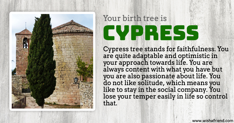 Your birth tree cypress tree What is the meaning of tree
