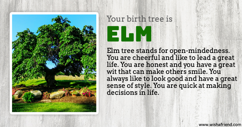 Your birth tree elm tree What is the meaning of tree
