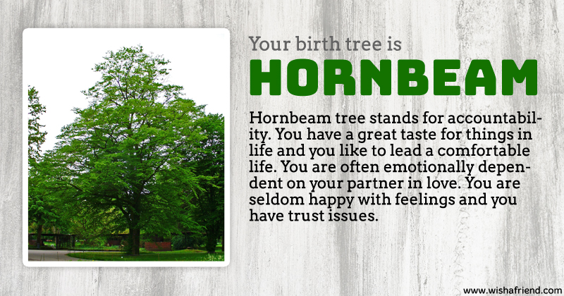 Your birth tree hornbeam tree What is the meaning of tree