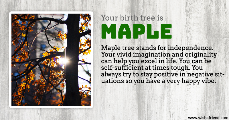 Your birth tree maple tree What is the meaning of tree
