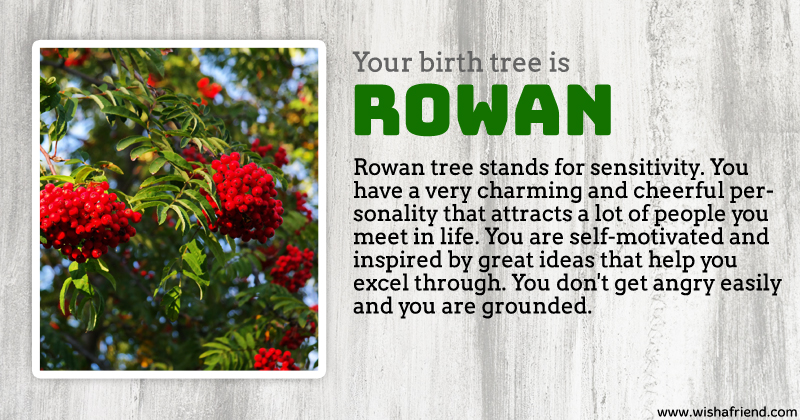 Your birth tree rowan tree What is the meaning of tree