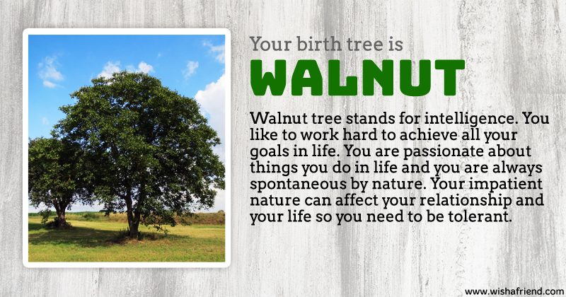 Your birth tree walnut tree What is the meaning of tree