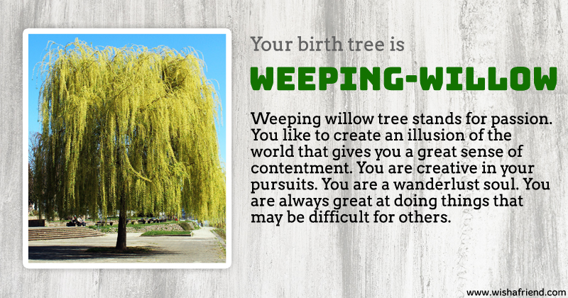 Your Birth Tree Weeping Willow Tree