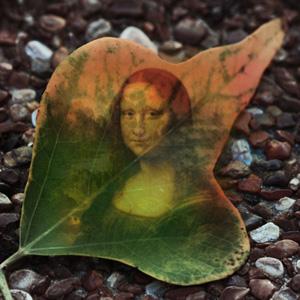 Fallen Tree Leaf