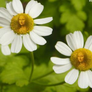 Flower Twins