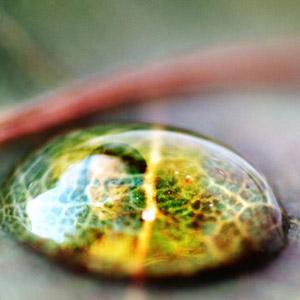Inside A Water Drop