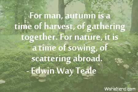 1195-autumn