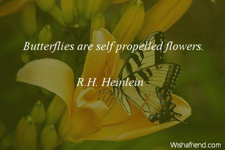 2430-butterfly