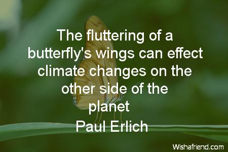 2438-butterfly