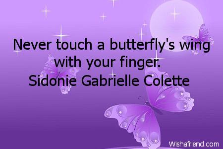 2440-butterfly