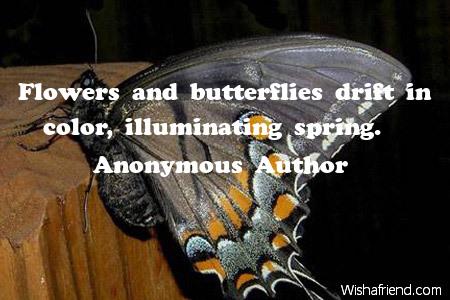 2441-butterfly
