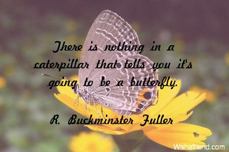 2442-butterfly