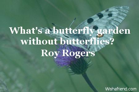 2443-butterfly