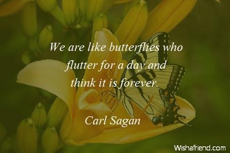 2445-butterfly