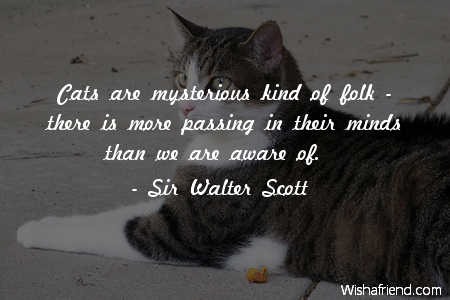 sir walter scott quote cats are mysterious kind of folk there is