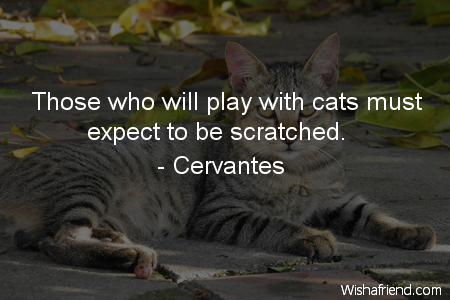 Those Who Ll Play With Cats Must Expect To Be Scratched