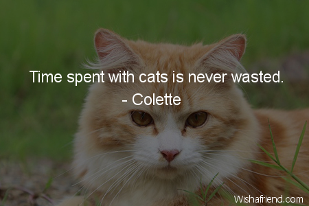 2527-cat