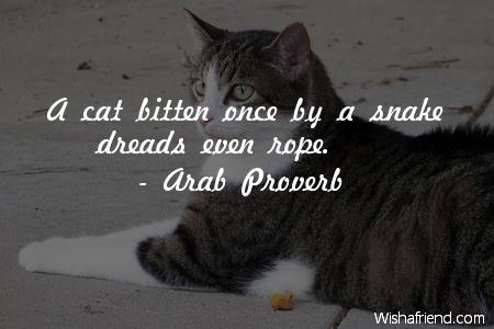 2533-cat