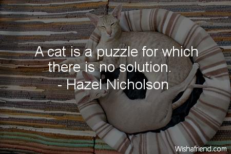 2543-cat