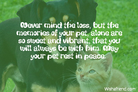 never mind the loss but the sympathy message for loss of pet