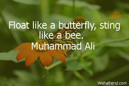 2431-butterfly