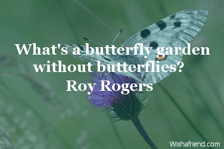 butterfly-What's a butterfly garden without