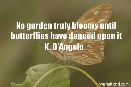 butterfly-No garden truly blooms until