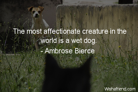 dog-The most affectionate creature in