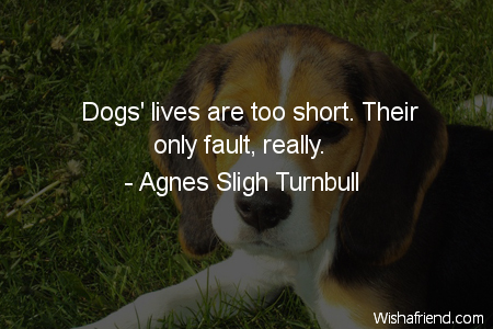 dog-Dogs' lives are too short.