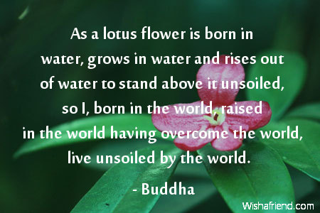 Buddha Quote As A Lotus Flower Is Born In Water Grows In Water And