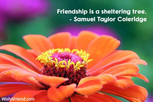 11541-friendship