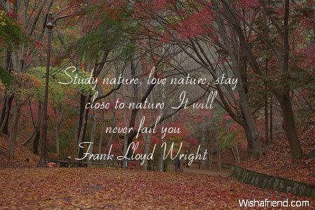 7819-nature