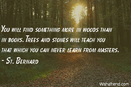 nature-You will find something more